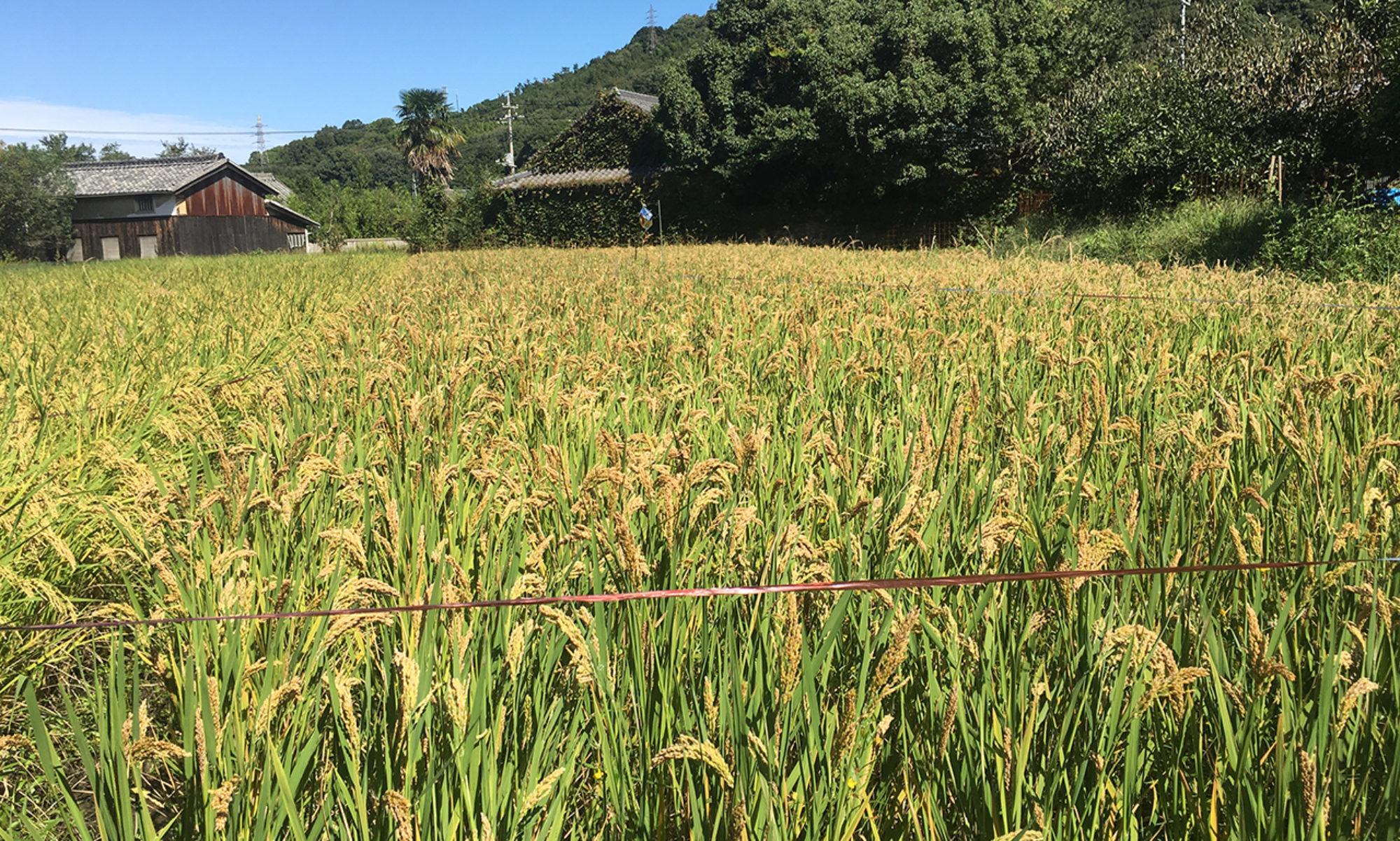 豊島自然農